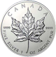 Silver Maples